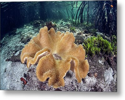 Leather Coral Metal Print by Ethan Daniels
