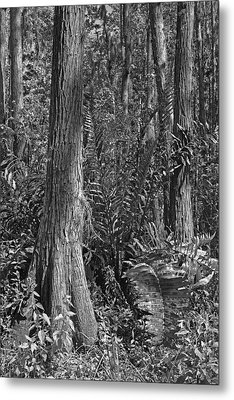 Leather Fern. Shingle Creek Basin. Metal Print by Chris  Kusik
