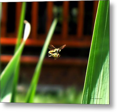 Metal Print featuring the photograph Leave No Bee Behind by Thomas Woolworth