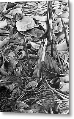 Leaves Metal Print by Aaron Spong