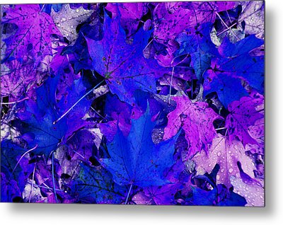 Metal Print featuring the photograph Leaves by Aimee L Maher Photography and Art Visit ALMGallerydotcom