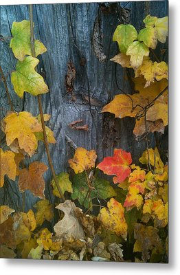 Leaves And Shed Metal Print by Charles Morford