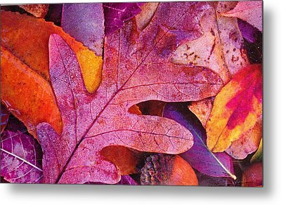 Leaves Metal Print by Anne-Elizabeth Whiteway