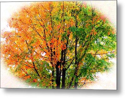 Leaves Changing Colors Metal Print by Cynthia Guinn