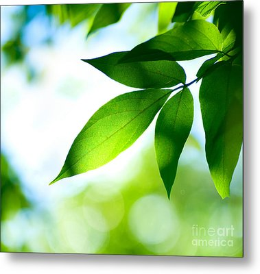 Metal Print featuring the photograph Leaves Green by Boon Mee