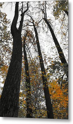 Leaves Lost Metal Print by Photographic Arts And Design Studio
