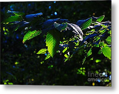 Leaves Of Shining Metal Print by Tim Rice