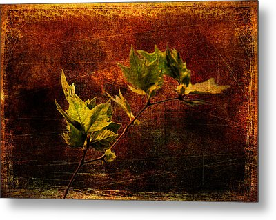 Leaves On Texture Metal Print