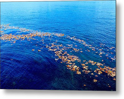 Leaves On The Ocean Metal Print by Sharon Talson