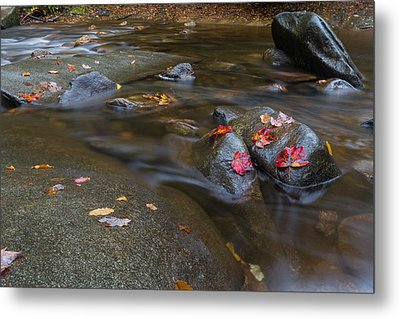 Leaves On The River Path Metal Print by Andres Leon