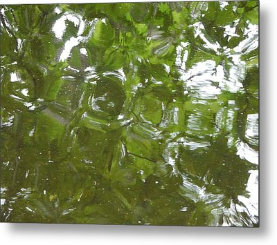 Metal Print featuring the photograph Leaves Reflected by Winifred Butler