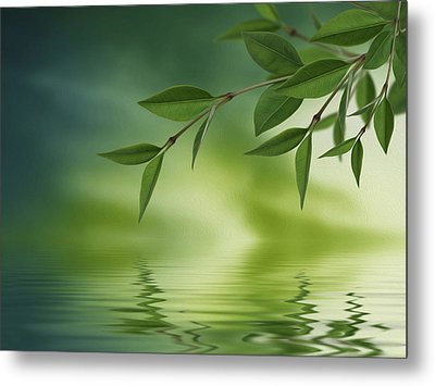 Leaves Reflecting In Water Metal Print by Aged Pixel