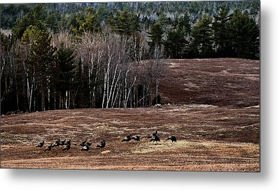 Leaving Town For The Holidays Metal Print by Susan Capuano