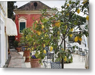 Lemon Trees On A Villa Terrace Metal Print by George Oze