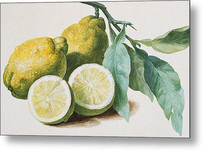 Lemons Metal Print by Pierre Joseph Redoute