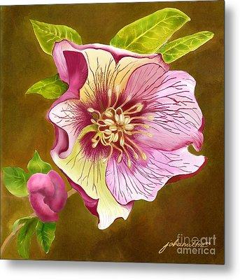 Lenten Rose Metal Print by Joan A Hamilton