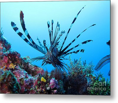 Metal Print featuring the photograph Leon Fish by Sergey Lukashin
