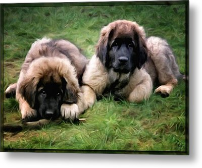 Leonberger Puppies Metal Print by Gun Legler