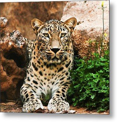 Leopard Metal Print by Amr Miqdadi