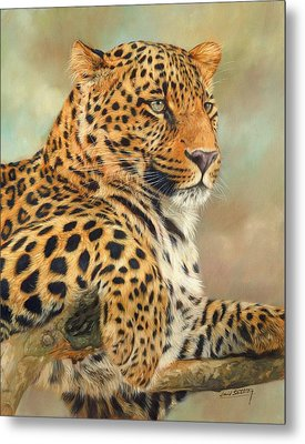Leopard Metal Print by David Stribbling