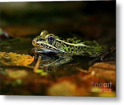 Leopard Frog Floating On Autumn Leaves Metal Print by Inspired Nature Photography Fine Art Photography