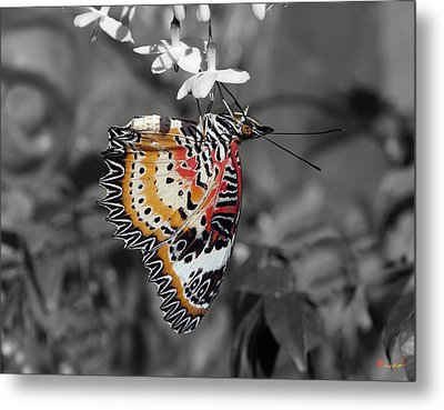 Metal Print featuring the photograph Leopard Lacewing Butterfly Dthu619bw by Gerry Gantt