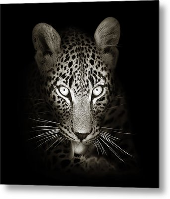 Leopard Portrait In The Dark Metal Print by Johan Swanepoel