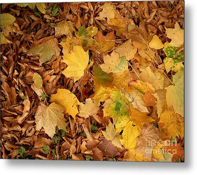 Metal Print featuring the photograph Les Feuilles Mortes by Mariana Costa Weldon