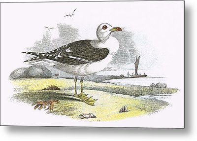 Lesser Black Backed Gull Metal Print