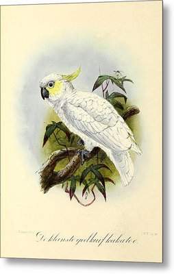 Lesser Cockatoo Metal Print by Dreyer Wildlife Print Collections