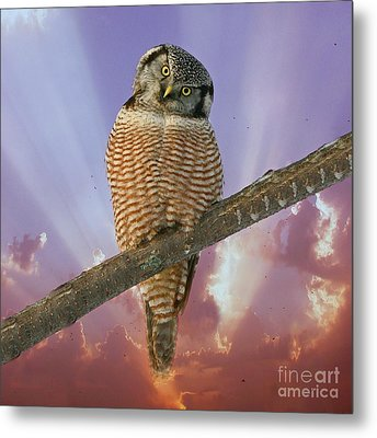Lest Ye Be Judged Metal Print by Heather King