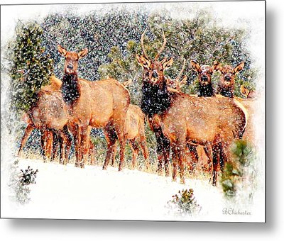 Let It Snow - Barbara Chichester Metal Print by Barbara Chichester
