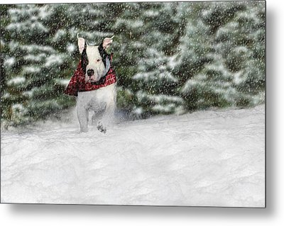 Snow Day Metal Print by Shelley Neff