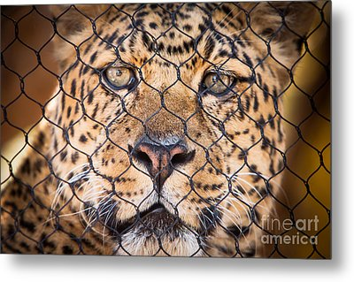Let Me Out Metal Print by John Wadleigh