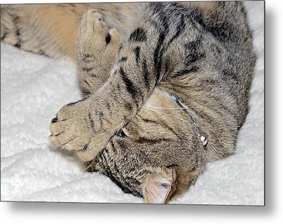 Let Me Sleep Metal Print by Susan Leggett