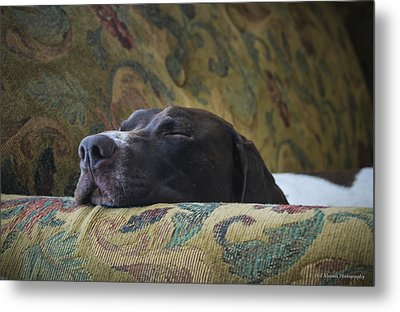Metal Print featuring the photograph Let Sleeping Dogs Lie. by Phil Abrams