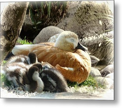 Let Sleeping Ducks Lie Metal Print