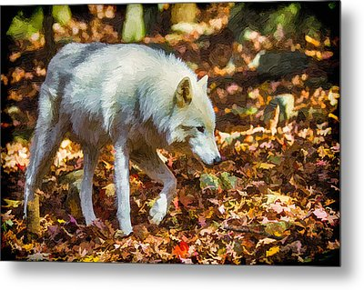 Let The Timber Wolf Live Metal Print by John Haldane