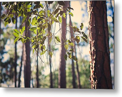 Let Your Light Shine Through Metal Print by Maria Robinson