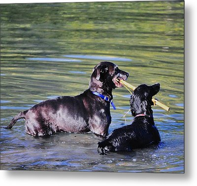 Let's Play In The River Metal Print by Kristina Deane