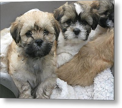 Lhasa Apso Puppy Painting Metal Print by Marvin Blaine