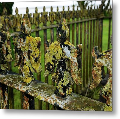 Lichen On Iron Railings In Unpolluted Air Metal Print by Cordelia Molloy