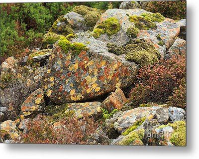 Lichens And Moss In Glen Strathfarrar Metal Print by Louise Heusinkveld