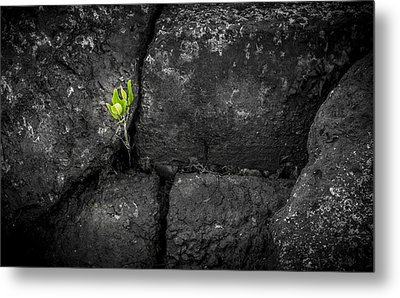 Life Finds A Way Metal Print by Marvin Spates