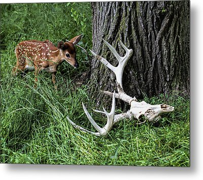 Life Goes On Metal Print by John Crothers