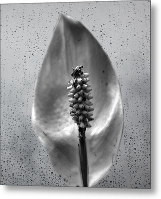 Life In Black And White Metal Print by Dan Sproul
