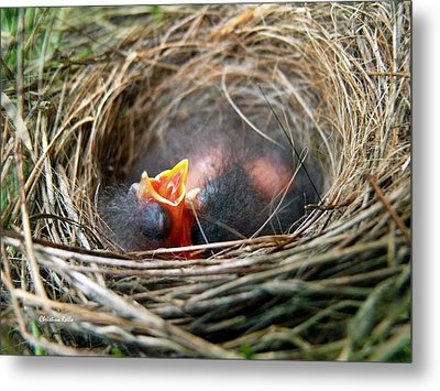 Life In The Nest Metal Print by Christina Rollo