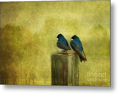 Life Long Friends Metal Print by Beve Brown-Clark Photography