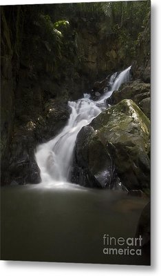Metal Print featuring the photograph life of Borneo. by Gary Bridger
