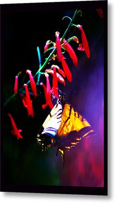 Life Of Butterfly Metal Print by Susanne Still